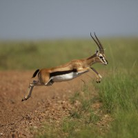 Why we need to focus more on supporting the Gazelle companies to successfully Scale Up